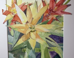 Live on Fire – Bromeliads