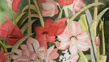 Amaryllis-Fanfare, Original Watercolor