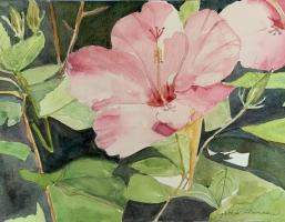 Hibiscus, Original Watercolor